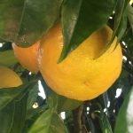 Dale al limón